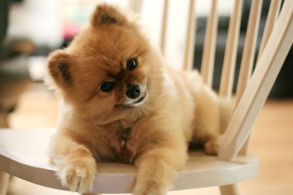 5 пород собак, с которыми не нужно гулять