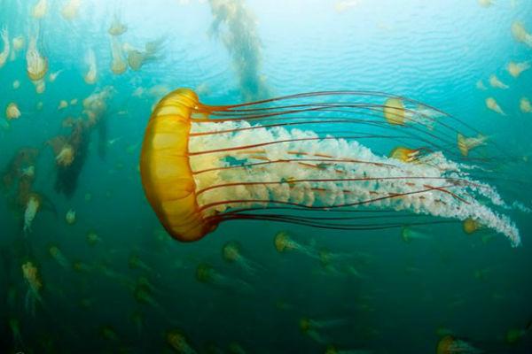 Медузы – инопланетные существа