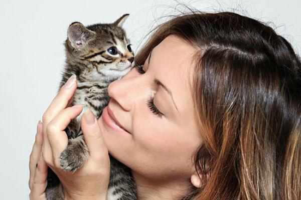 Привыкает кошка к дому или к хозяину