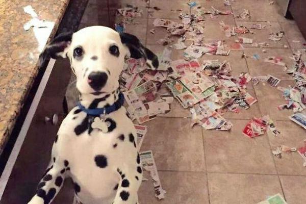 Собаки тоже могут быть засранцами