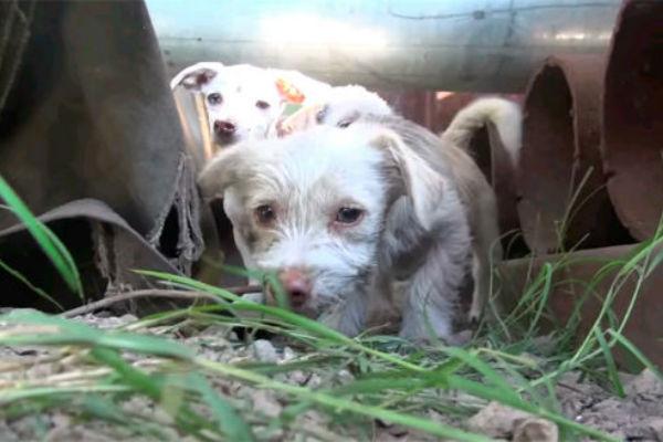 История о спасении семейства собак