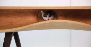 Стол для котов и людей CATable