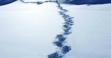Ученые уточнили, кто такой снежный человек