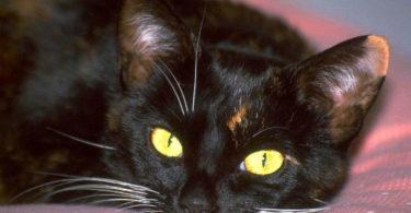 Хорошие поверья про черных кошек