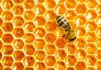 Соты воск мёд целебный