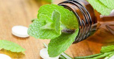 Мелисса – признанное лекарственное растение с седативным действием