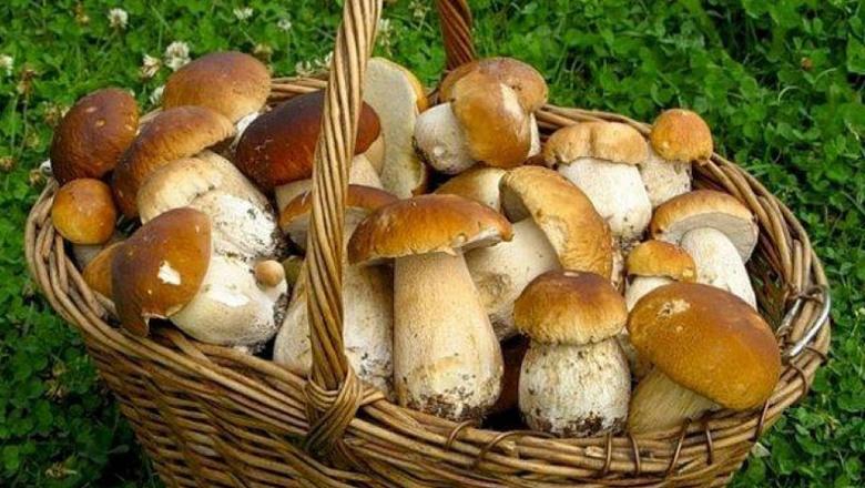грибы есть нельзя